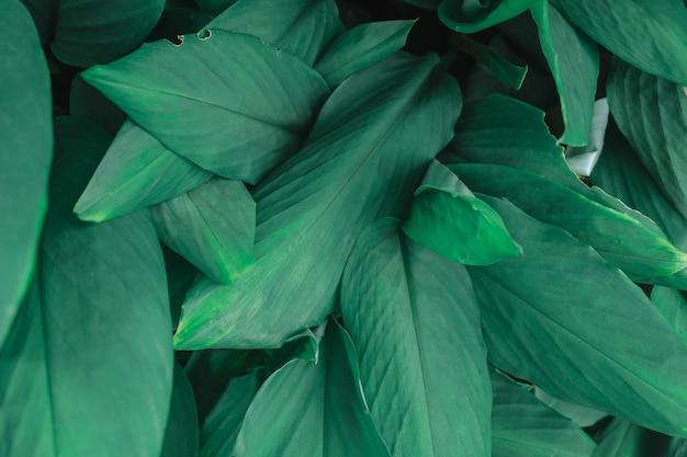 Fond de feuille verte et toile de fond de feuille verte