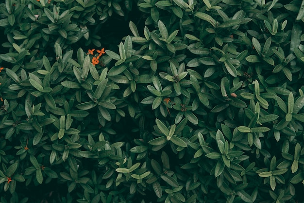 Fond de feuille verte tropicale, thème de ton sombre.