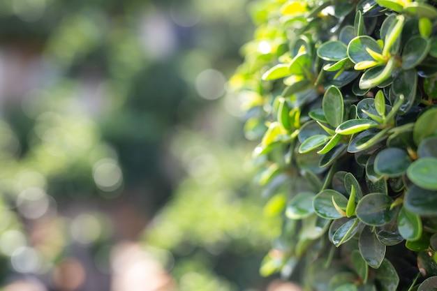 Fond de feuille verte.