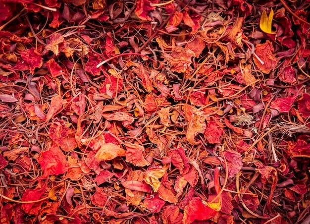 Fond de feuilles d'automne coloré sur le sol de la forêt