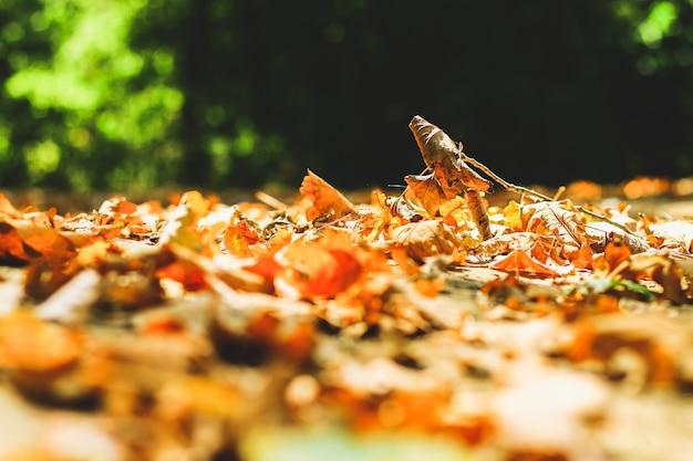 Fond de feuilles d'automne feuilles d'automne dans un parc sur la terre, jaune, feuilles vertes en automne parc.