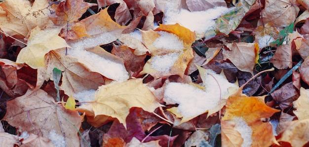Fond de feuilles d'automne jaunes dans la neige