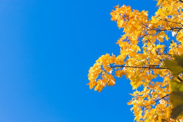 Fond de feuilles d'automne tombées