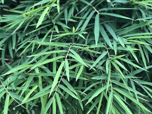 Fond de feuilles de bambou thaï