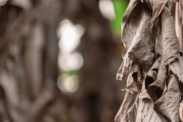 Fond de feuilles de bananier séchées.