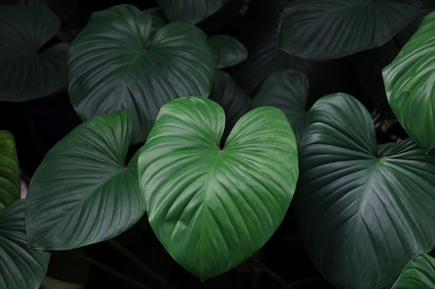 Fond de feuilles botaniques