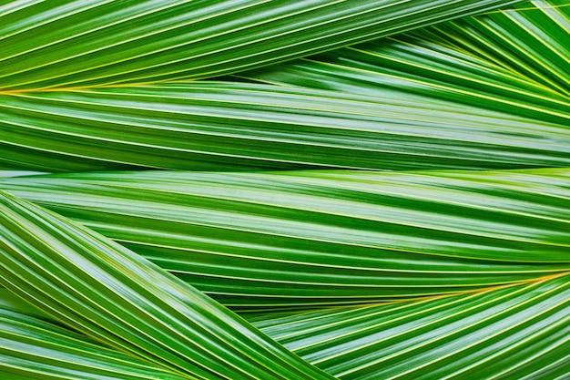Fond de feuilles de coco.