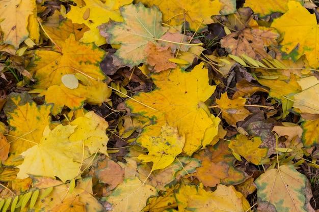 Fond des feuilles colorées d'automne