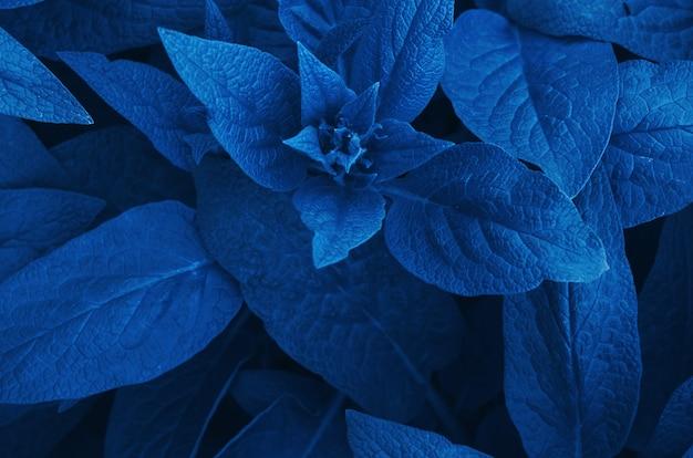 Fond de feuilles. couleur de l'année 2020 classic blue.