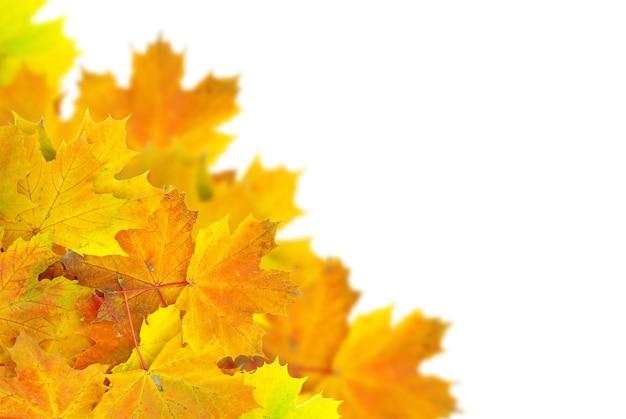 Fond de feuilles d'érable automne