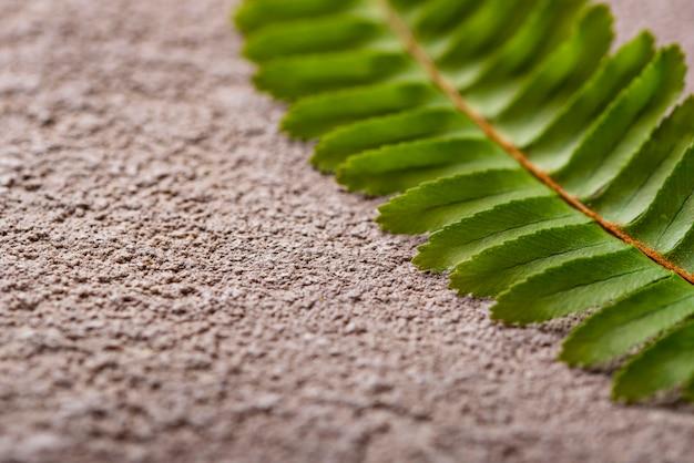 Fond avec des feuilles de fougère verte.
