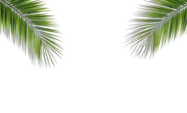 Fond de feuilles de palmier. feuilles de palmier tropical sur un fond coloré vide