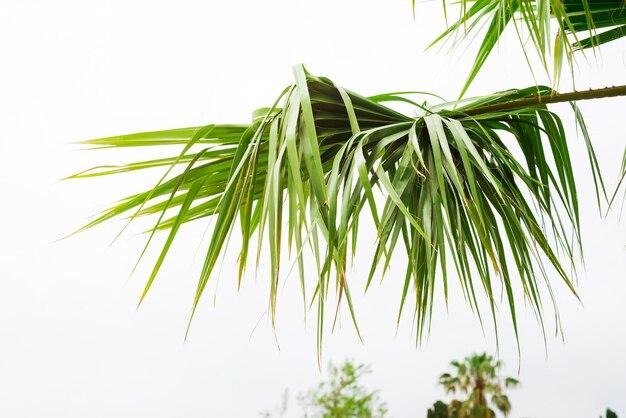 Fond de feuilles de palmier avec la lumière du soleil pour la conception, espace de copie de conception de vacances voyage