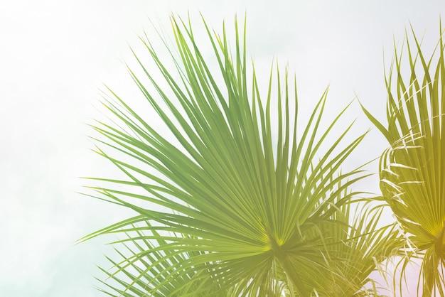 Fond de feuilles de palmier avec la lumière du soleil