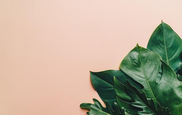 Fond de feuilles de palmier tropical avec espace de copie