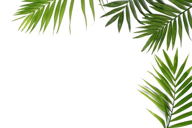 Fond de feuilles de palmier