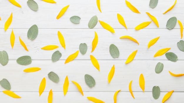 Fond de feuilles et pétales