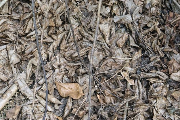 Fond de feuilles sèches