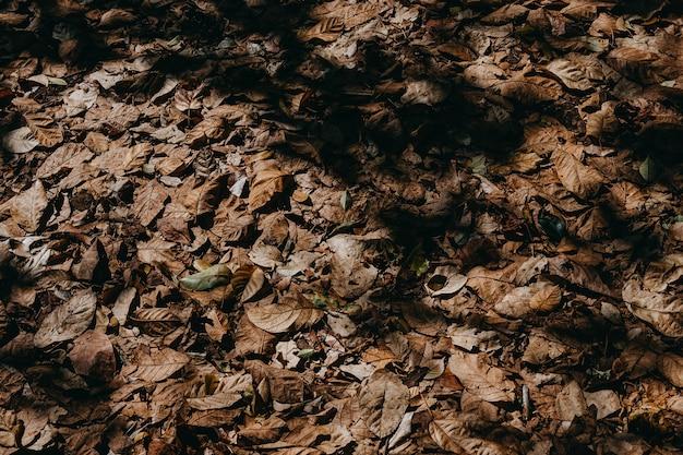 Fond de feuilles sèches.