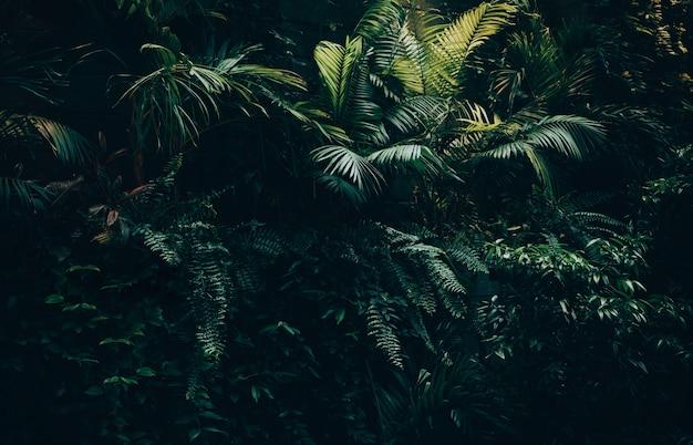 Fond de feuilles tropicales, jardin de feuilles de jungle