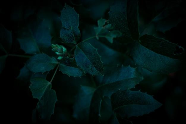 Fond de feuilles vert foncé