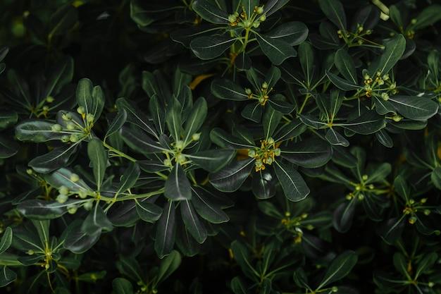 Fond de feuilles vertes avec des bourgeons