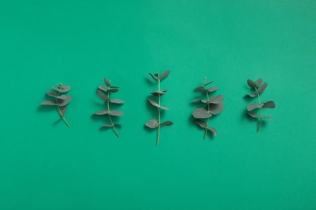 Fond de feuilles vertes d'eucalyptus