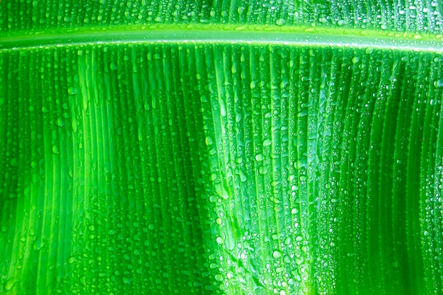 Fond de feuilles vertes fraîches