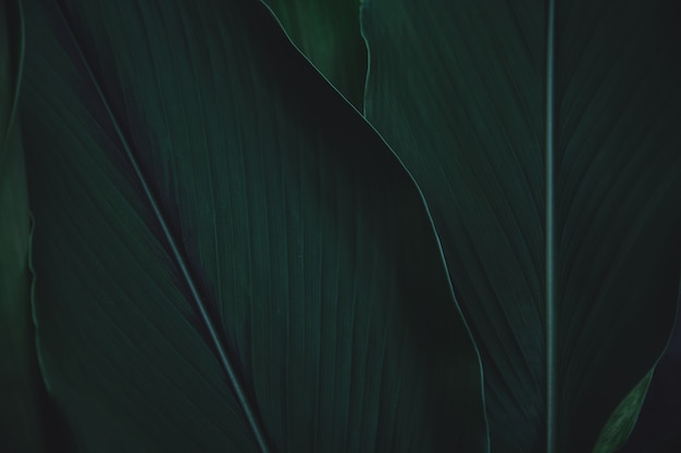 Fond de feuilles vertes. lay plat. fond de ton vert foncé de nature