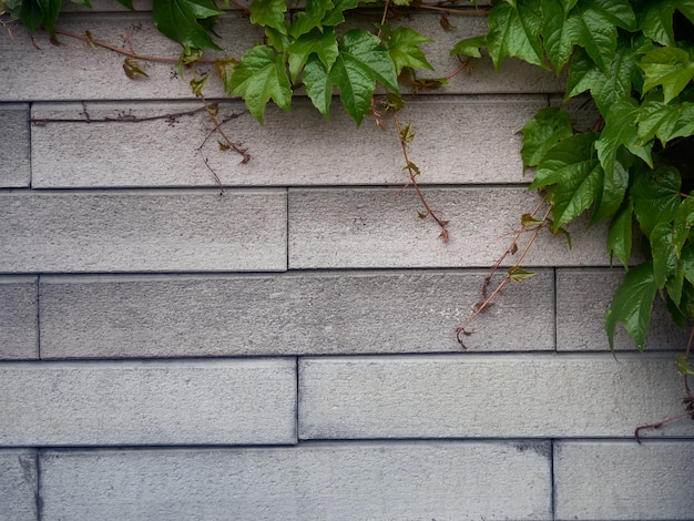 Fond de feuilles vertes avec motif de brique.