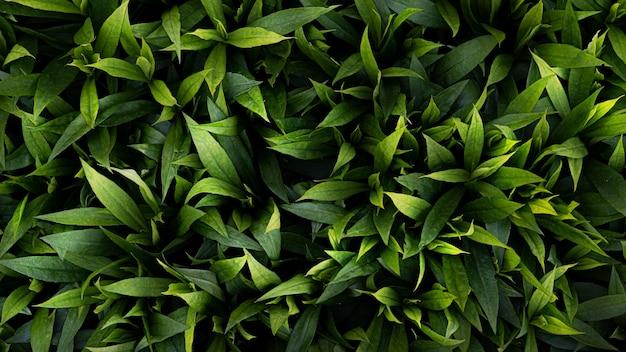 Fond de feuilles vertes. tapis de feuilles vertes luxuriantes par une chaude journée d'été