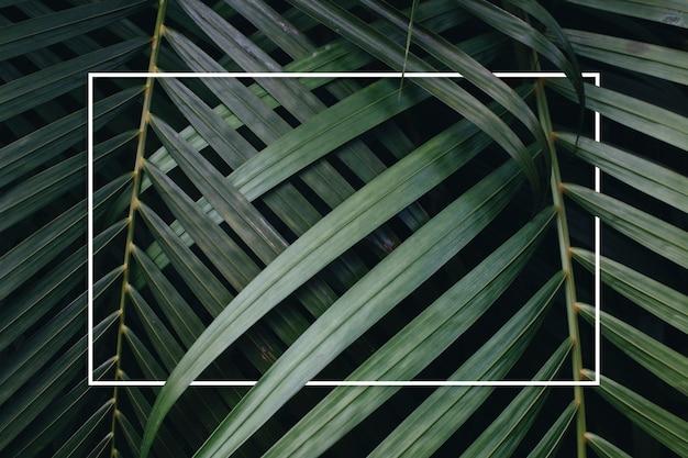 Fond de feuilles vertes tropicales