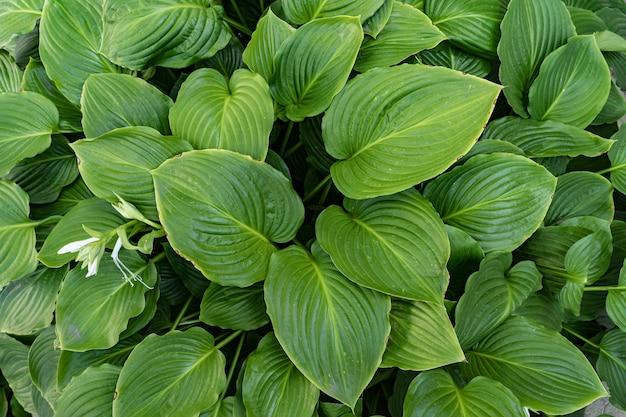 Fond de feuilles vertes,