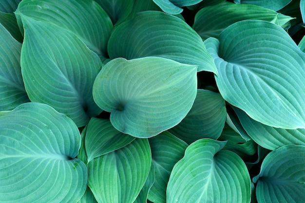 Fond de feuilles vertes