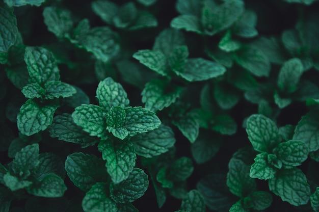 Fond de feuilles vertes.