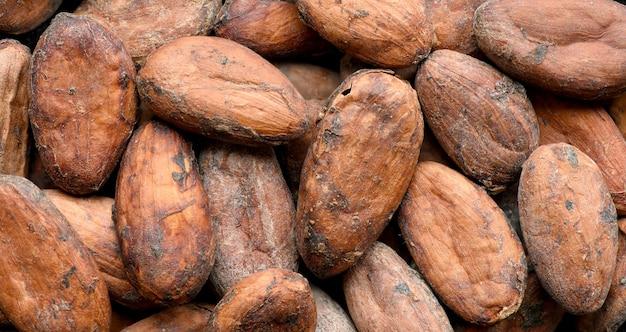 Fond de fèves de cacao