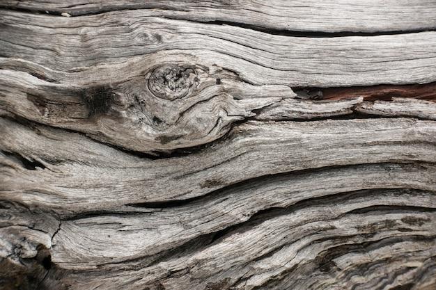 Fond de fissures de surface d'écorce d'arbre. texture en bois nature.