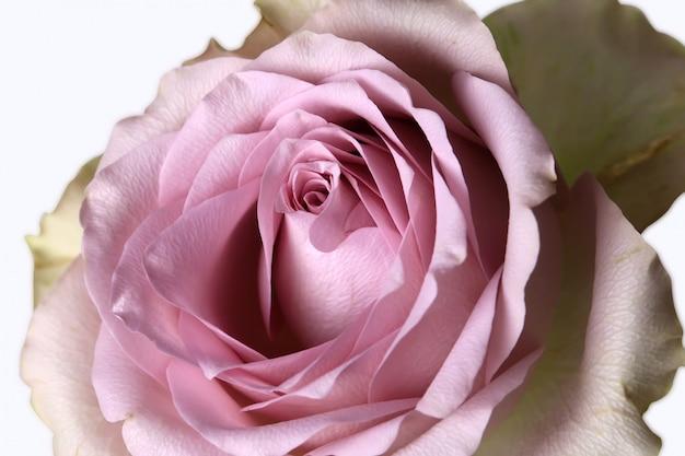 Fond de fleur délicate chic rétro minable rose