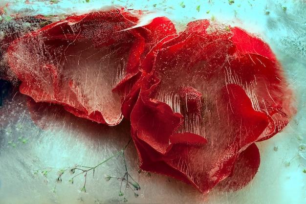 Fond de fleur rose dans un glaçon avec des bulles d'air.