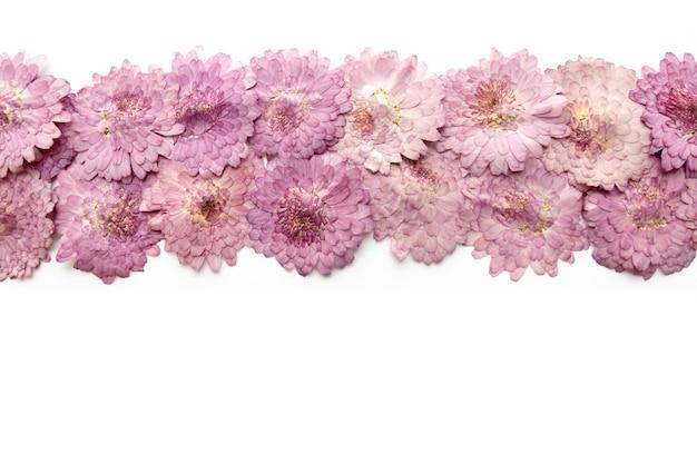 Fond de fleur rose isolé sur blanc. fleur épanouie abstraite.