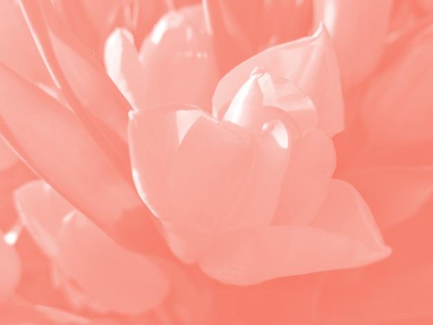 Fond de fleur tonique