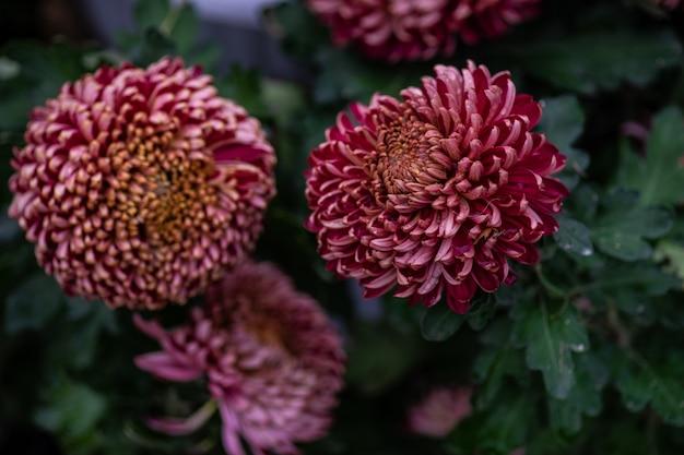 Fond de fleurs automnales