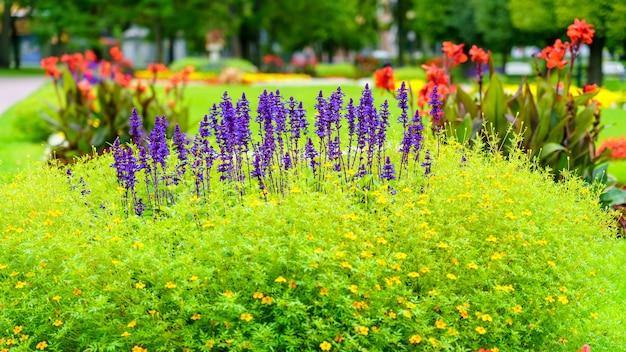 Fond de fleurs colorées et de lys bleus poussant parmi l'herbe.