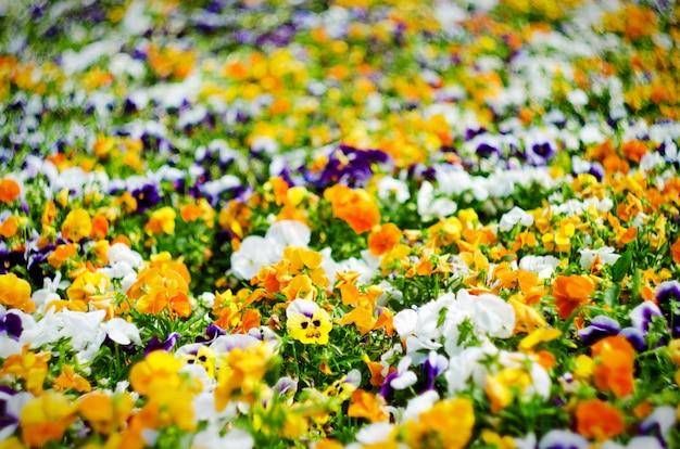 Fond de fleurs d'été