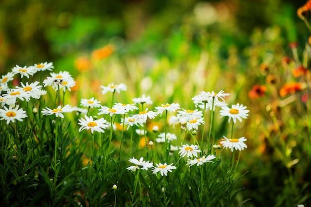 Fond de fleurs de la faune