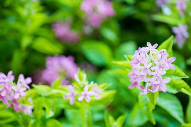Fond de fleurs et feuilles pourpres