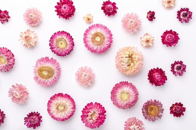 Fond de fleurs. fleurs sèches sur fond blanc. mise à plat. vue de dessus. copier l'espace - image