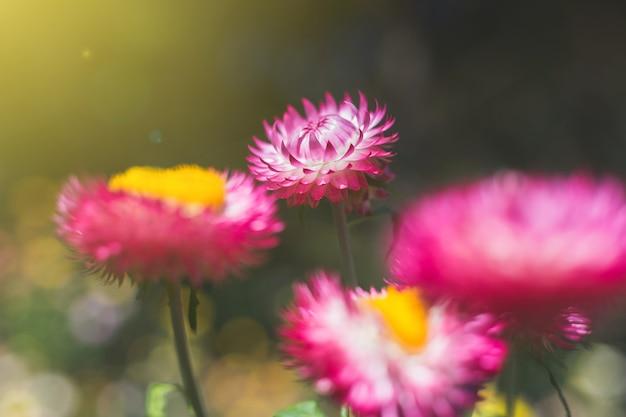 Fond de fleurs flou au lever du soleil le matin