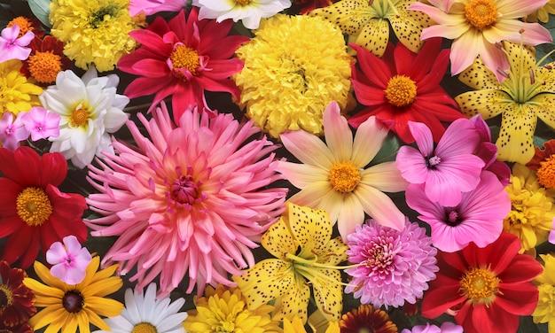 Fond de fleurs de jardin d'été