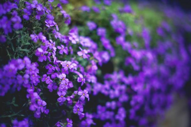 Fond de fleurs. jardin de printemps